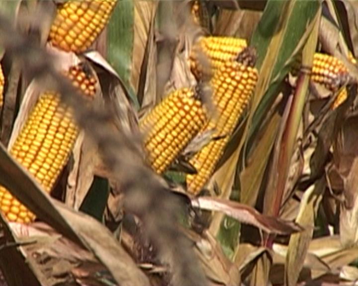 Rast poljoprivrede pet do šest odsto u 2013.