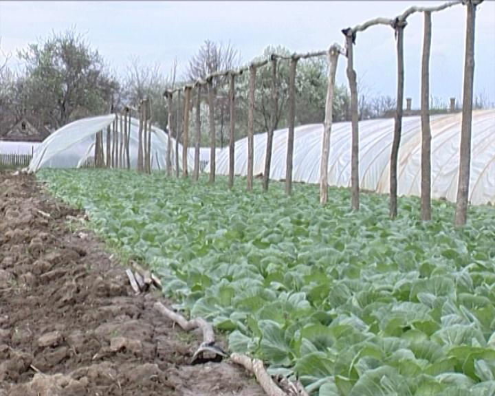 Pomoć poljoprivrednicima u Novom Pazaru