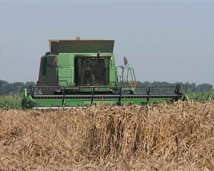 Sramotno niska cena pšenice