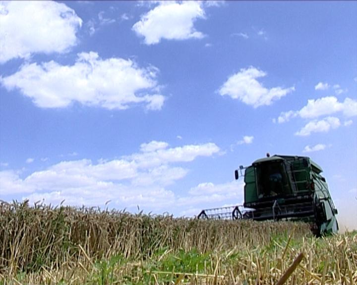 Rekordan rod pšenice u Banatu