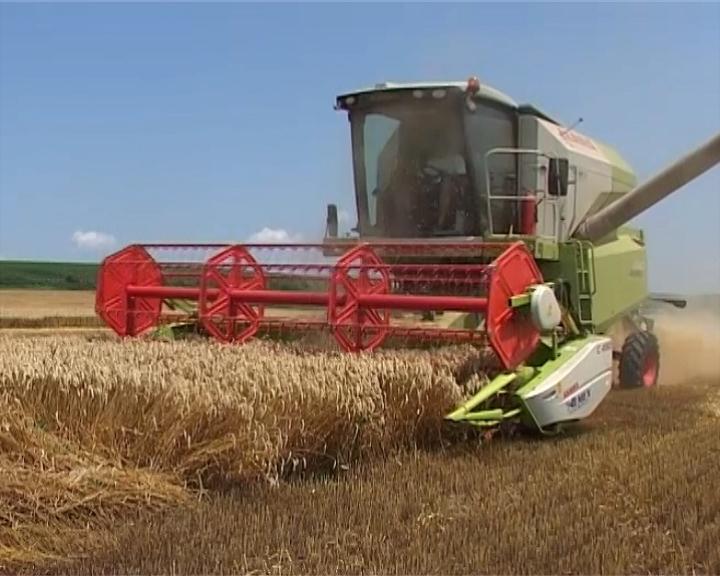 Ugovoren izvoz 450.000 tona pšenice