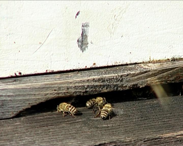 Briga za pčele