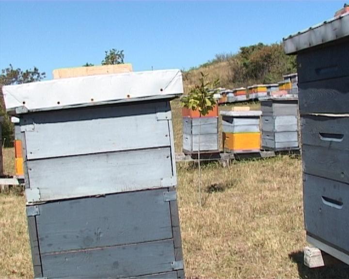 Propisi ugrožavaju pčelarstvo