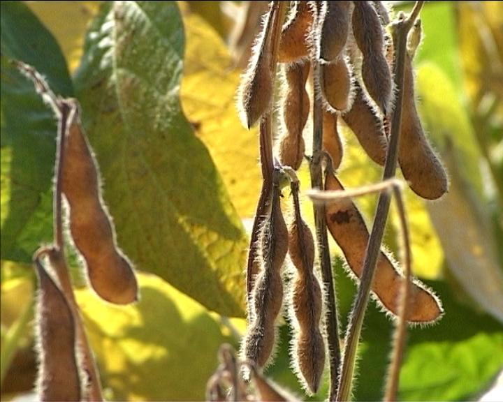 Isplaćeni podsticaji za biljnu proizvodnju