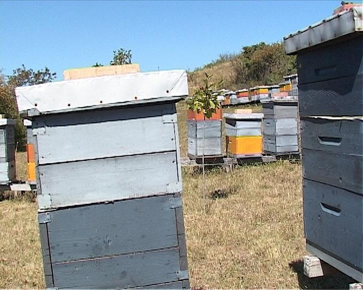 Sve veći izvoz meda