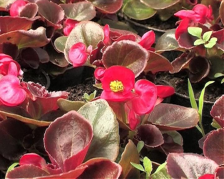 Flosal-za negu i prihranu cveća