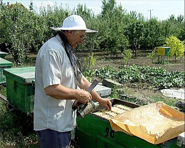 Pčelari opsedaju Vlasinu