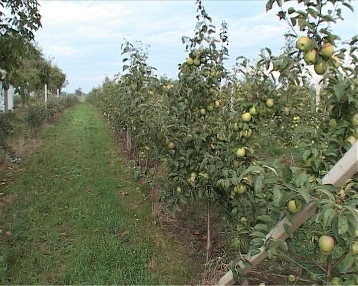 Svega 4.8% zemljišta pod voćnjacima