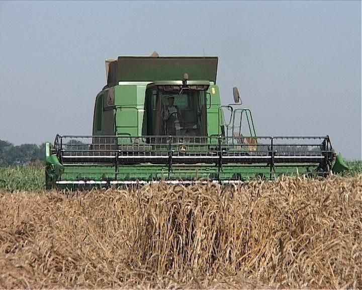 Žetva pšenice pri kraju