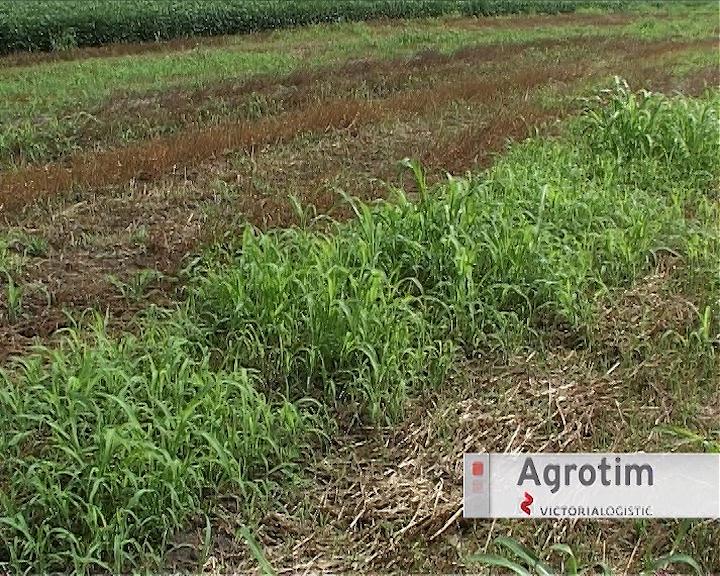 Primena totalnih herbicida