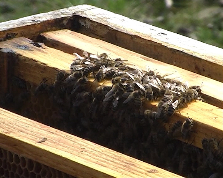 Pomoć pčelarima