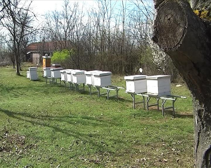 20 miliona evra štete pčelarstvu zbog majskih poplava