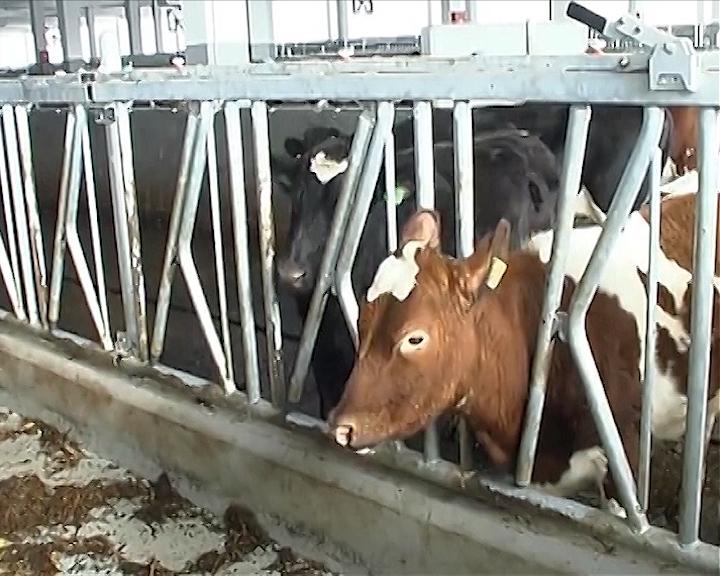 Hotel za krave