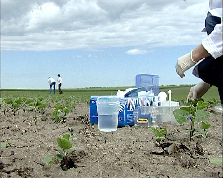 GMO soja u Vojvodini