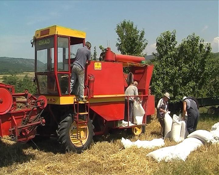 Manje pšenice u Hrvatskoj