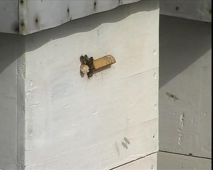 Loše stanje u pčelarstvu