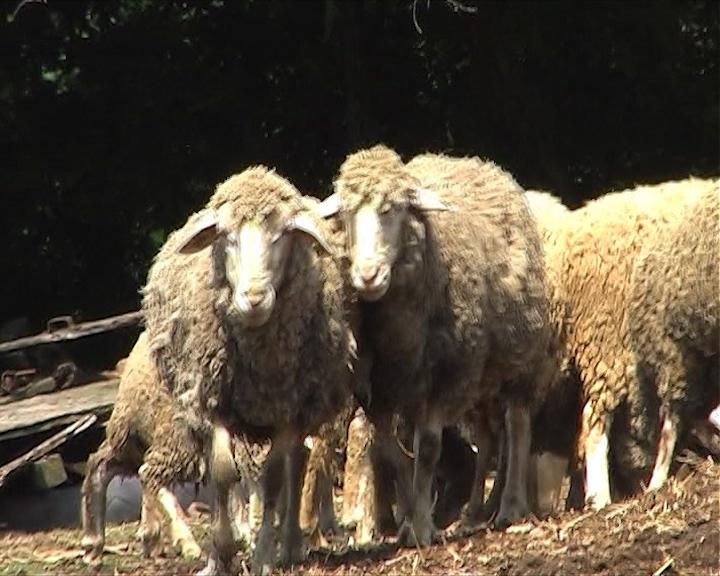 Poboljšanje uslova za stočarstvo