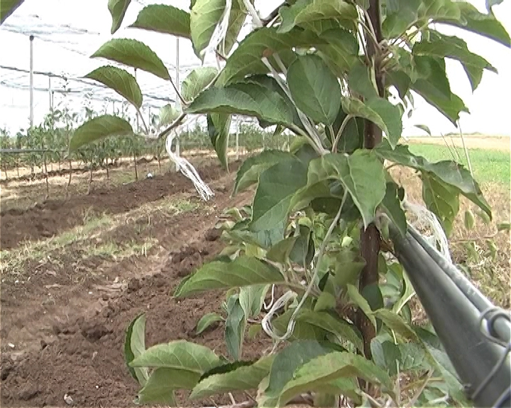 Subvencionisane sadnice u Nišu