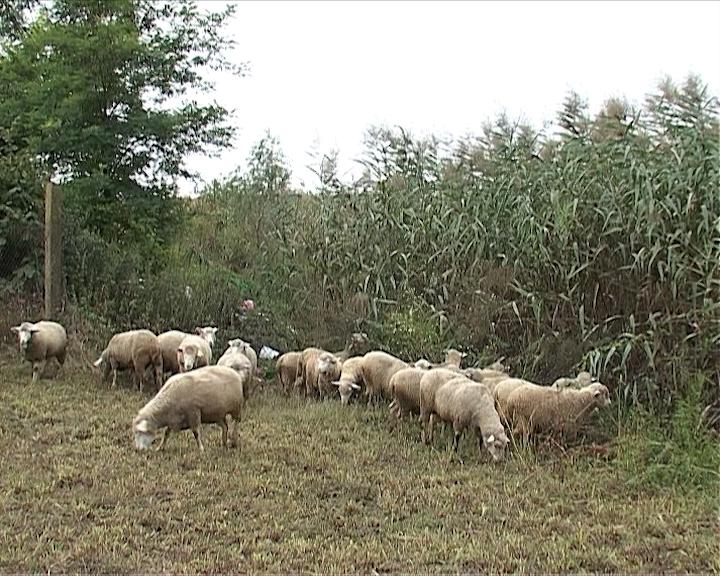 Ekspanzija stočarstva u Sjenici
