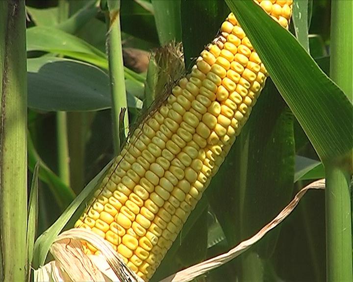Grejanje na kukuruz