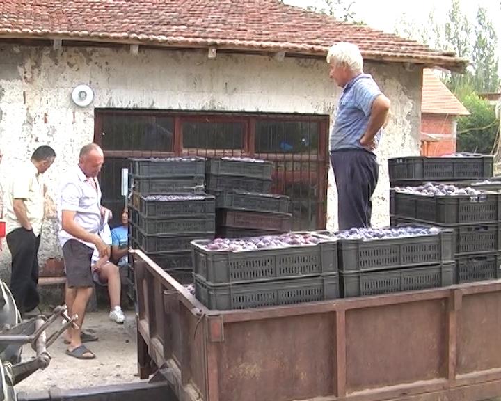 Spas srpske poljoprivrede leži u udruživanju