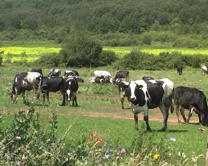 Neophodno - registrovanje poljoprivrednih gazdinstava