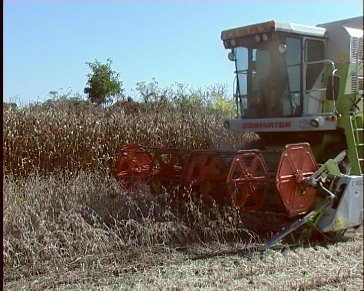 Samo žito u godišnjem proseku