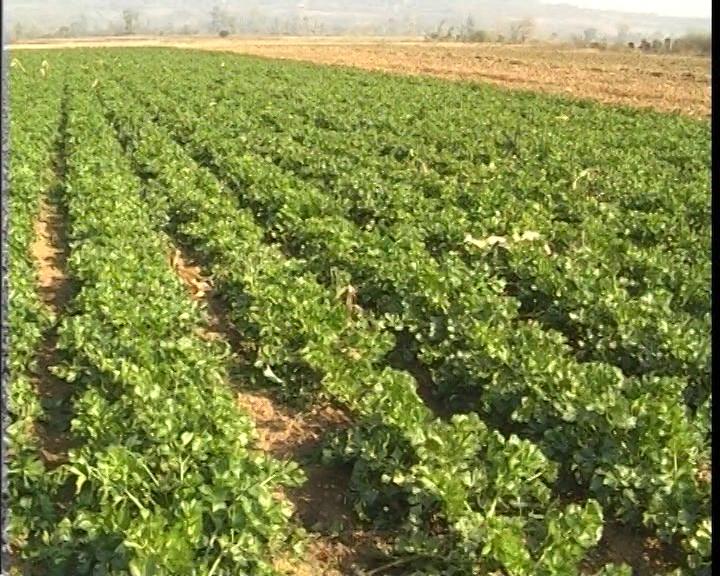 Popravimo plodnost zemljišta - povećajmo prinose