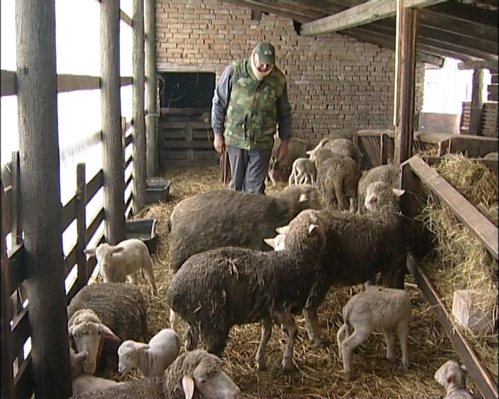 Standardi za ovčije sireve