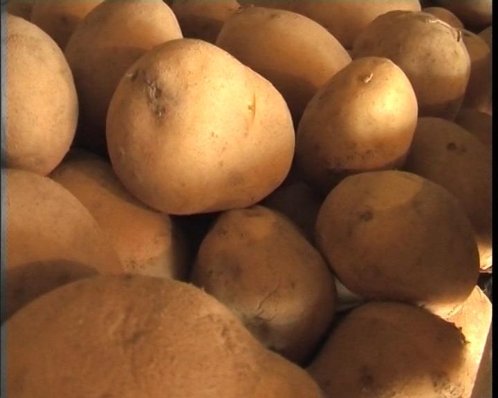 Suvoplaninski krompir ima tržište i kupca