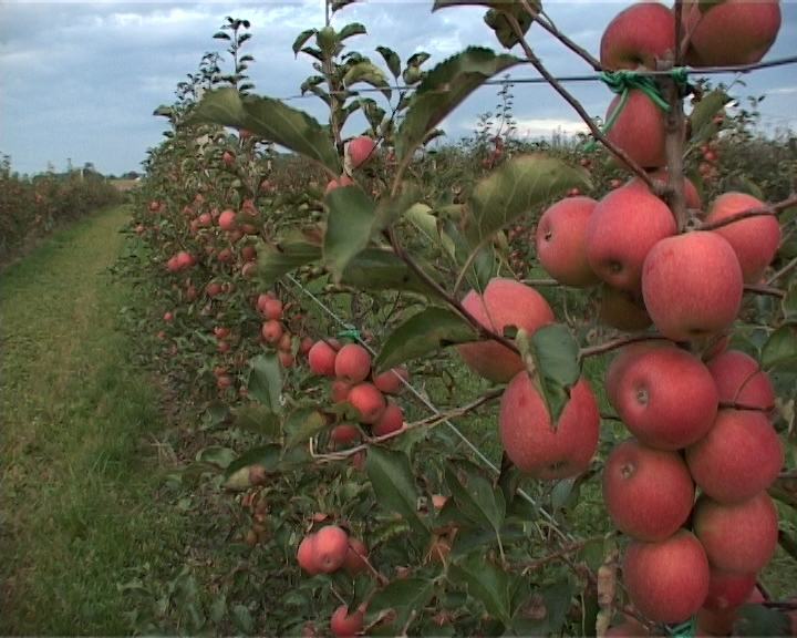 Najveća šansa - organsko voćarstvo