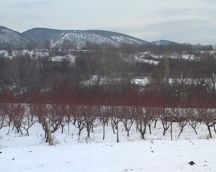 Zimski pregled voćnjaka