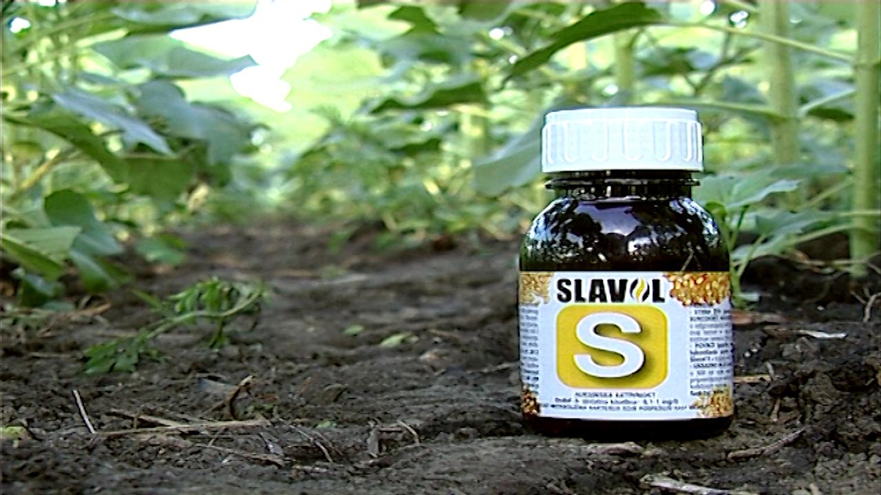 Stimulator rasta - Slavol S