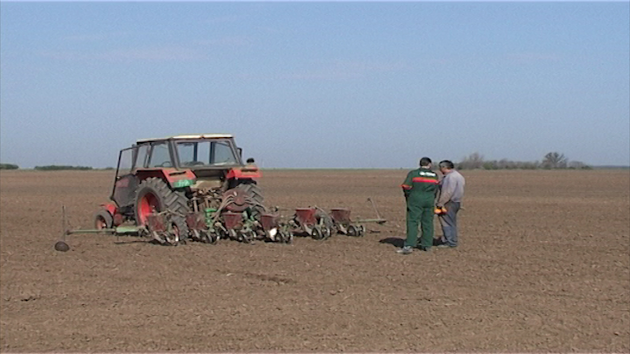 Pod kukuruzom 10.000 hektara