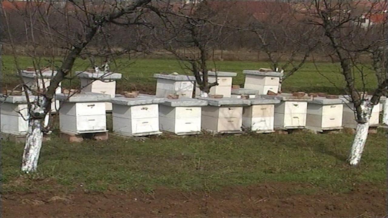 Nove generacije pčela