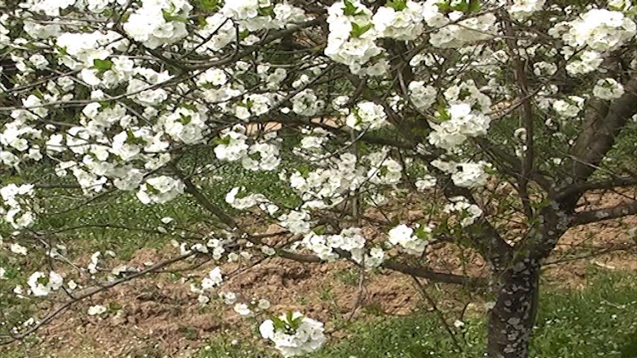 Zaštiti voćnjake i vinograde na vreme