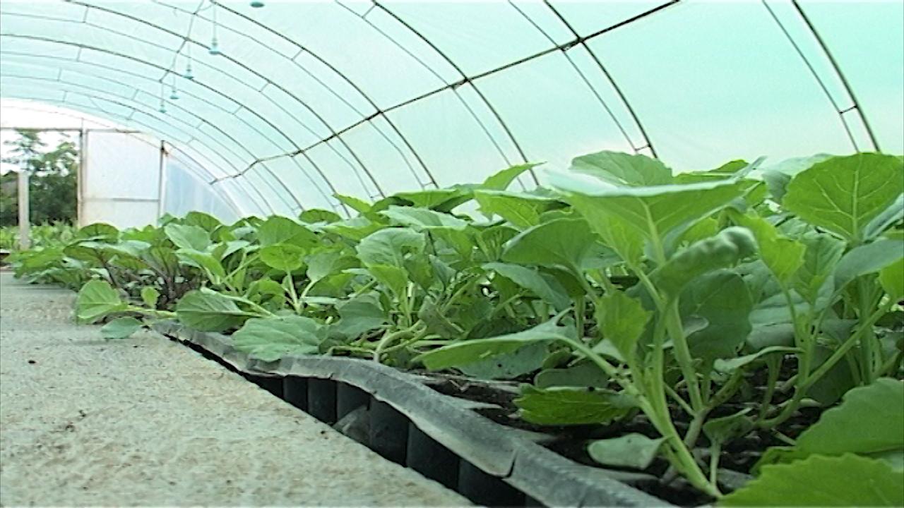 Podsticaji za organsku proizvodnju