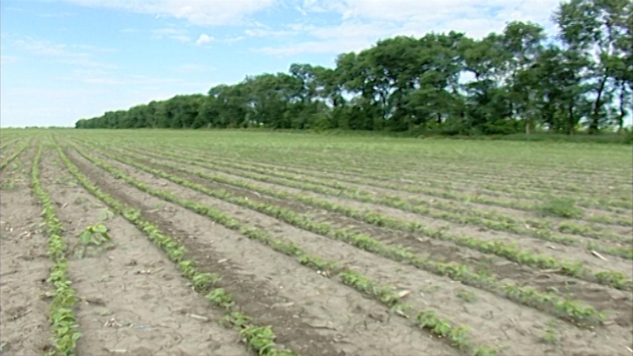 Kompanija Bajer preuzima Monsanto?