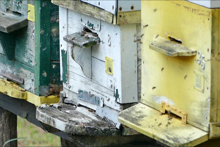 Loša godina za pčelare