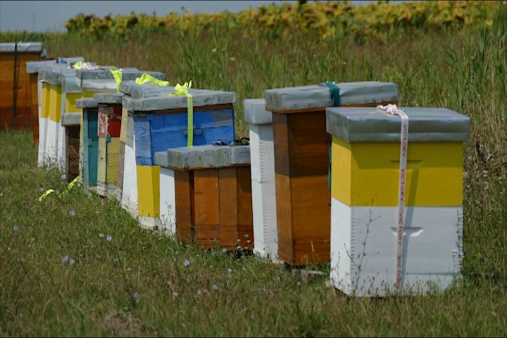 Loše vreme omelo pčelare