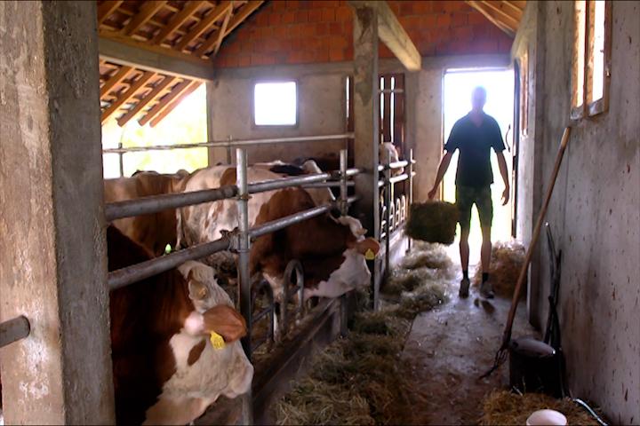Oborena cena stoke