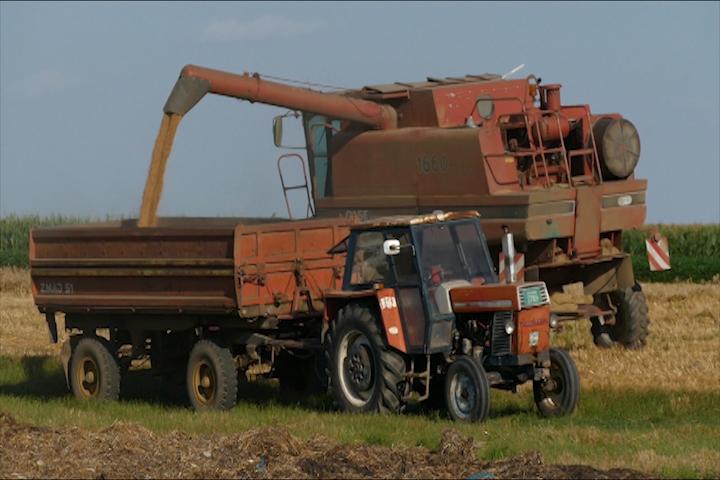 Pšenice i za izvoz