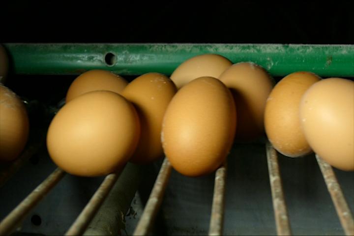 Ko kontroliše konzumna jaja?