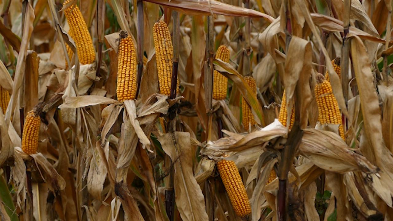 Pomoć poljoprivrednim proizvođačima