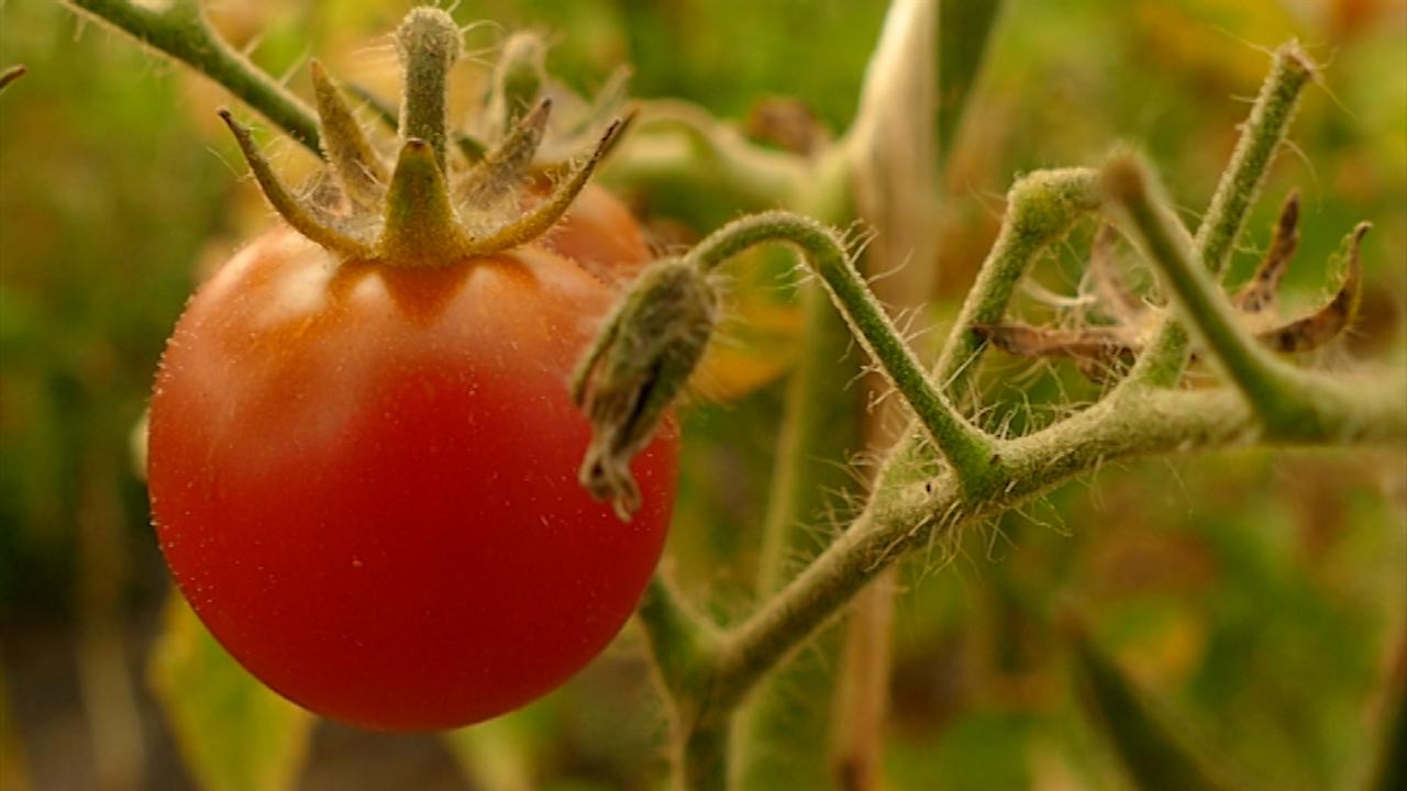 Voće i povrće - zdrvstveno ispravno