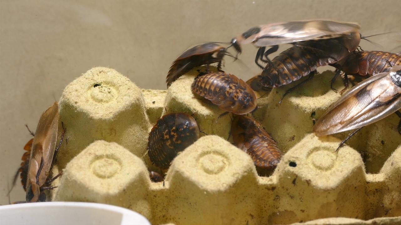 Hoće li insekti biti na jelovniku?