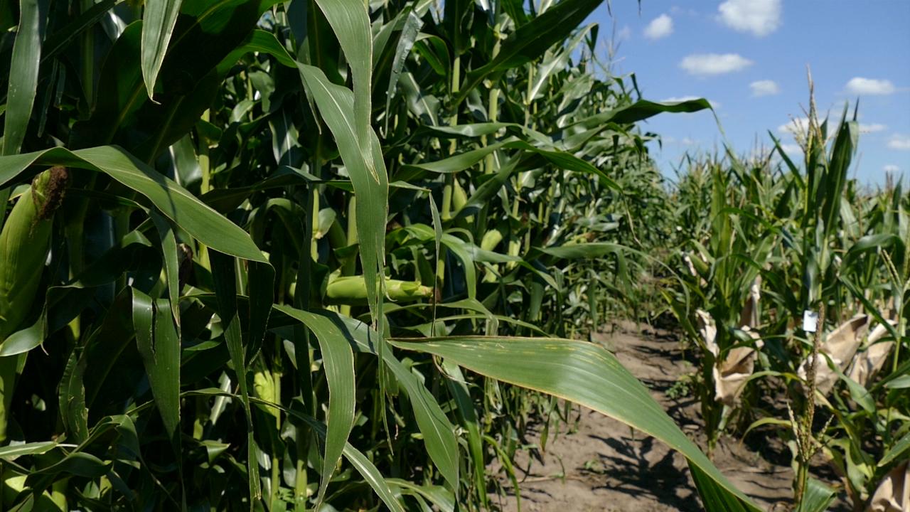 Rezultati primene GMO