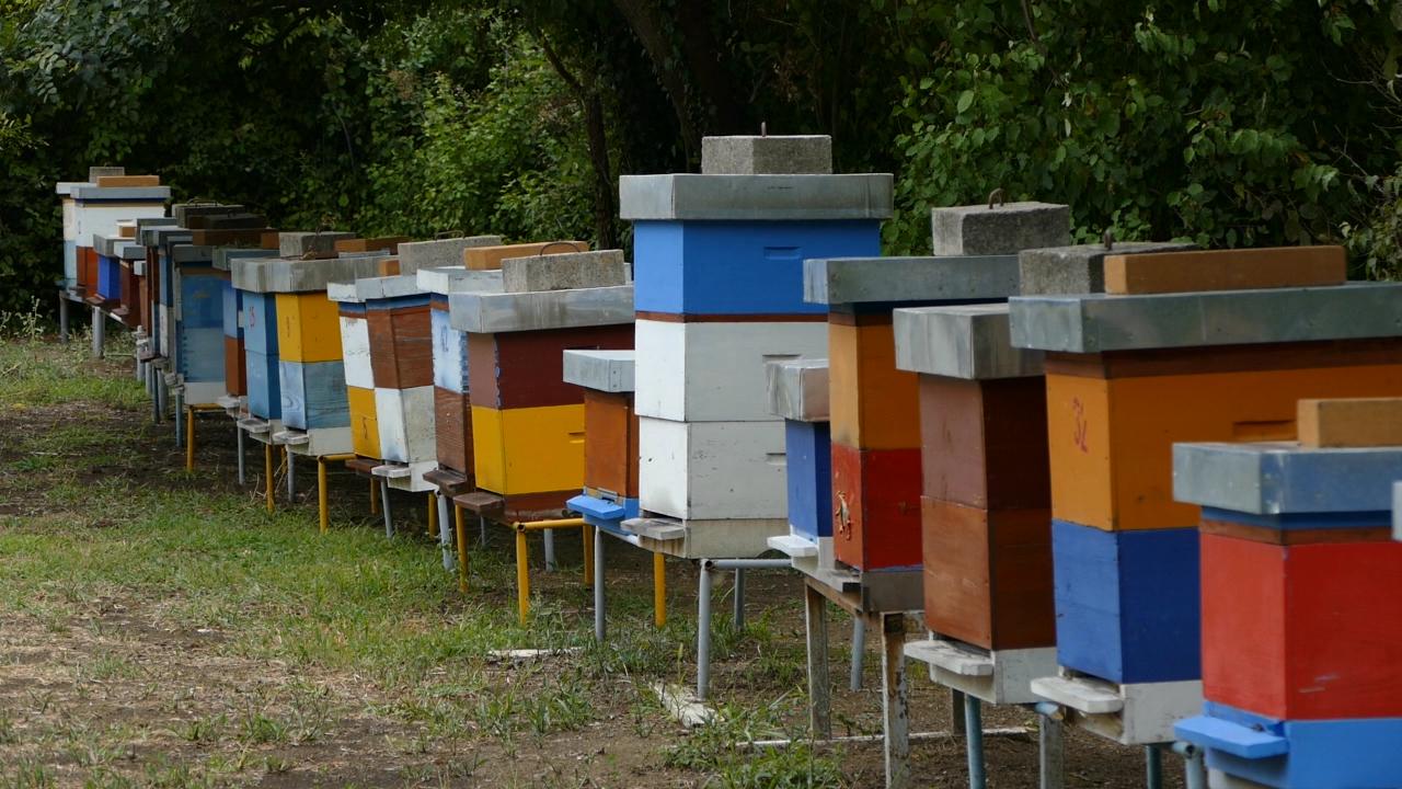 Nema zimskog sna za pčelare