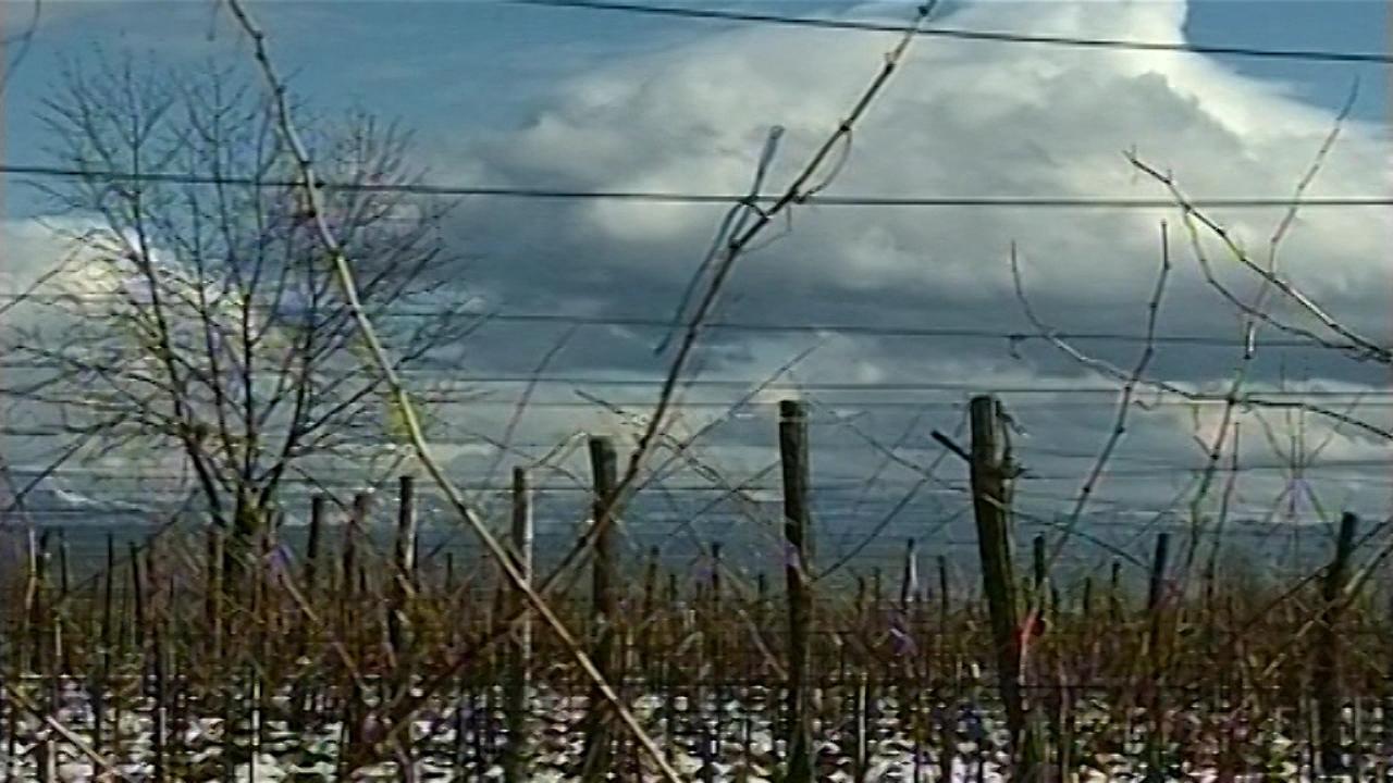 Interesovanje za vinogradarstvo raste