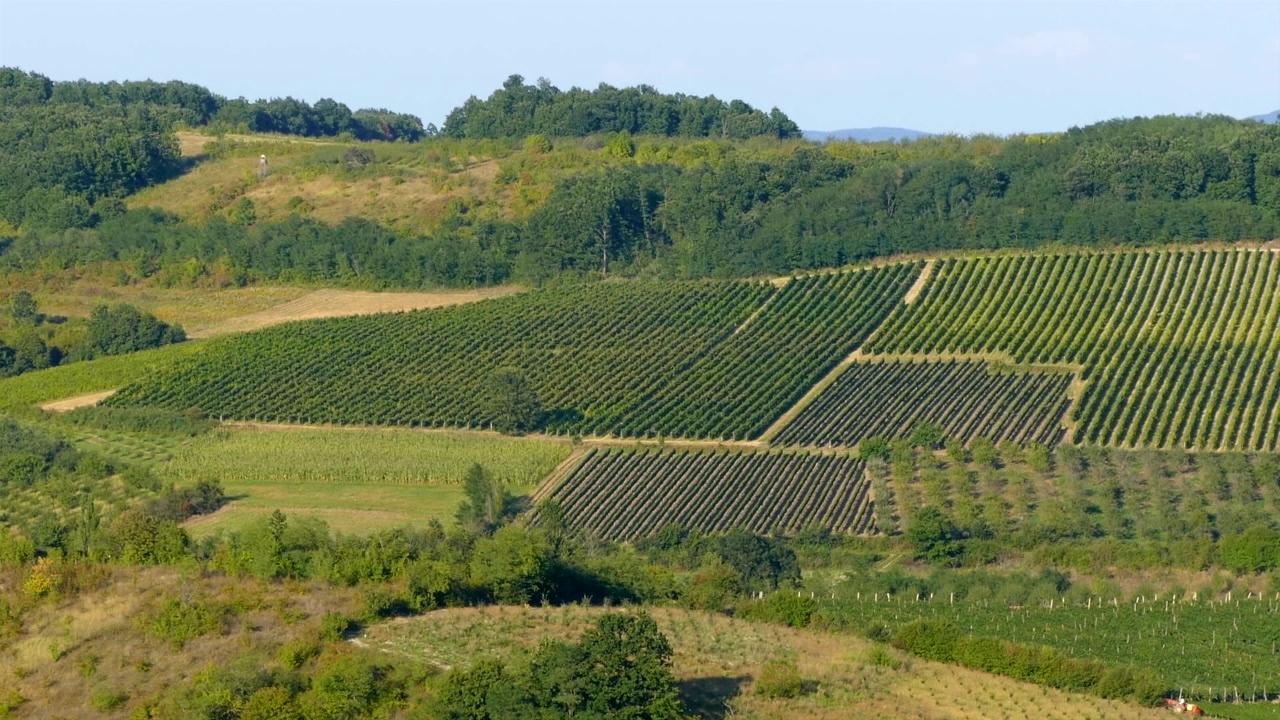 Bolji uslovi za vinogradare i vinare